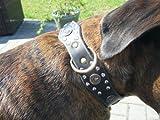 Bild: Hunde Halsband Echtleder  Sir Elvis  Länge 62 cm