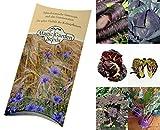 Saatgut Set: 'Violettes Gemüse', 7 besondere alte Gemüsesorten, die durch ihre lila-violette Farbe auffallen als Samen in schöner Geschenkverpackung