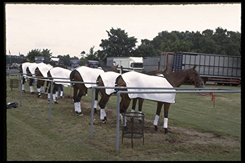 361077 Guards Polo Club Ellerston Ponies A4 Photo Poster Print 10x8 -