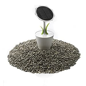 Solar-Ladestation Solar Sunflower