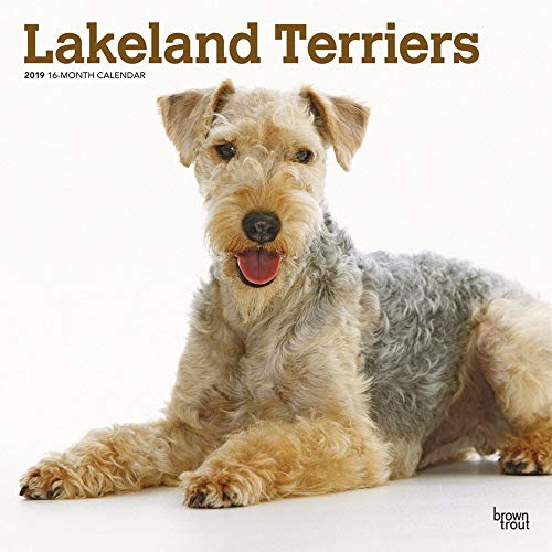 Lakeland Terriers 2019 Square Wall Calendar