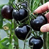 #9: Tomato Black Hybrid F1 Vegetable Seeds 50 Seeds Packet