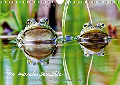 Un monde sensible (Calendrier mural 2017 DIN A4 horizontal): En macro ou au télézoom, divers animaux autour de nous... (Calendrier mensuel, 14 Pages ) (Calvendo Animaux)