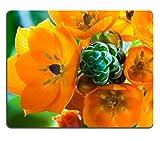 Liili Mauspad Naturkautschuk Mousepads ein Cluster von hellen orange Blüten auf einer grünen Stiel von eine orange Star Zimmerpflanze aus Südafrika 28133634
