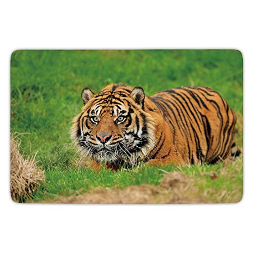 Bathroom Bath Rug Kitchen Floor Mat Carpet,Tiger,Sumatran Feline Hiding in Ambush while Stalking Its Prey Moments Before Attack,Green Orange,Flannel Microfiber Non-slip Soft Absorbent,23.6 X 15.7 Inch -
