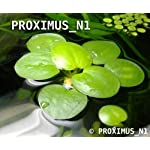 Proximus N1 Amazon Frogbit 10 X Mini Live Plants 8