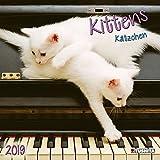 Kittens 2019: Kalender 2019 (Wonderful World)