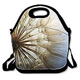 Die besten Boxer Totes - Kailey hello Insulated Lunch Bag Boxer Dog Lunchbox Bewertungen