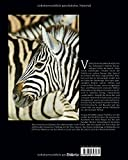 Namibia: Ein Premium***XL-Bildband in stabilem Schmuckschuber mit 224 Seiten und über 209 Abbildungen - STÜRTZ Verlag -