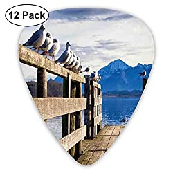 Guitar Picks 12-Pack,Seagulls On Old Wooden Jetty Lakeside Hills In Bavaria Landscape Picture