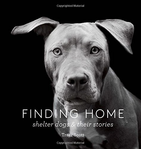 Finding Home : Shelter Dogs and Their Stories