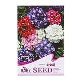 Kofun, bustina di semi di piante da fiore belle e vivaci [etichetta in lingua italiana non garantita], Verbena, 1 Bag