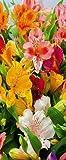 Textilbanner für Schaufenster - Thema: Sommer - Blumenwiese - 180cmx75cm