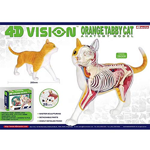 tze Anatomie Modell Katzenspielzeug Tierarzt Kit Bundle Rätsel 28 Stück Komponente ()