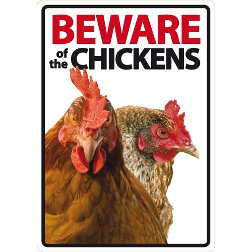 Magnet & Steel Beware of the chickens A5 Schild