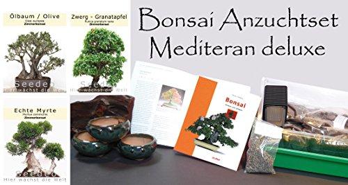 Seedeo Bonsai Anzuchtset Mediteran deluxe (Echte Myrte, Ölbaum, Zwerg Granatapfel)