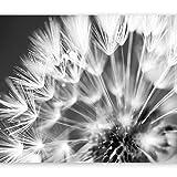 murando - Fototapete 350x256 cm - Vlies Tapete - Moderne Wanddeko - Design Tapete - Wandtapete - Wand Dekoration - Blumen Pusteblume b-B-0087-a-d