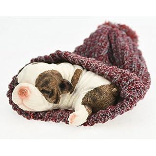 Ars-Bavaria So niedlich, kleines Hundekind Englische Bulldogge Welpe, schläft in einer Pudelmütze