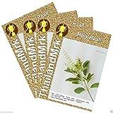 PLAT FIRM Germinazione dei semi: 8 White tuberi: topinambur ~ bianco e rosso tuberi ~ sunchoke Organic Seed Fresh