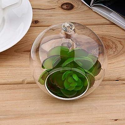 Erduo 8 cm Klarglas Runde 1 Loch Blume Stehen Topfpflanze Hängende Hydrokultur für Home Office Hochzeit Dekoration von Erduo - Du und dein Garten