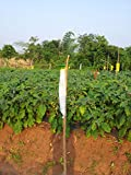 Pheromone Traps and Lures set for Leucinodes orbonalis for control of fruit and shoot borer in Brinjal.