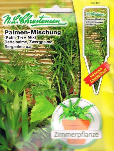 Palmen Mischung Dattelpalme, Zwergpalme, Bergpalme u.a Zimmerpflanze