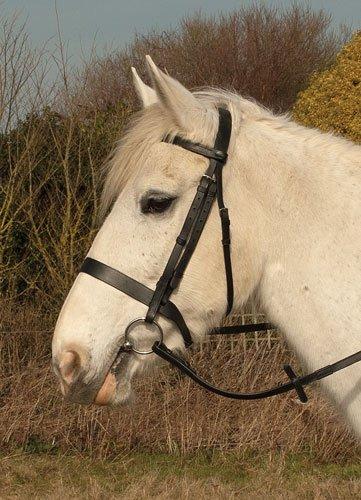 Heritage English Bridlework Zaumzeug/Trensenzaum aus Leder (englisches Reithalfter) Havanah Pony