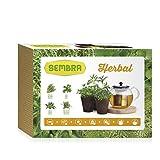 Sembra Herbal - Kit de cultivo