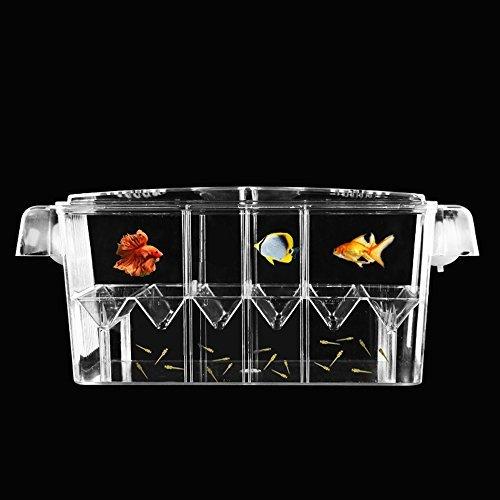 Petzilla pbi-3Aquarium Fisch Züchter Box für Brutplatz, 20,6x 8,9x 10,4cm