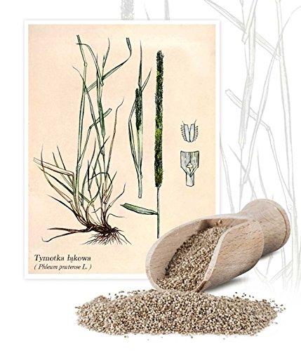 Herbe a la fléole'Alma' - 1 kg; fléole des prés, queue de chat de prairie, queue de chat commune -