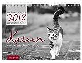 Katzen 2018: Wandkalender / Wochenplaner