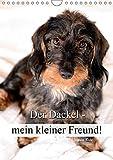 Der Dackel - mein kleiner Freund (Wandkalender 2019 DIN A4 hoch): Der Dackel - nicht nur als Jagd- und Gebrauchshund ein treuer Begleiter. (Planer, 14 Seiten ) (CALVENDO Tiere)