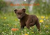 Aussie Welpen 2019 (Wandkalender 2019 DIN A3 quer): Australian Shepherd Welpen (Monatskalender, 14 Seiten ) (CALVENDO Tiere)