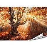 PMP-4life XXL Poster Magischer Wald | 140x100cm | hochauflösendes XXL Fotoposter Alter-Baum | Natur Poster extra groß | XL Wand-deko Bild Landschaft Bäume Blumen Wald