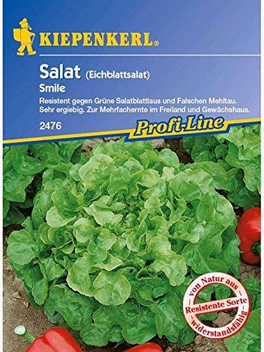 Eichblattsalat Vermehrung durch Aussaat