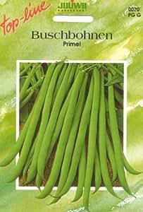 """Buschbohnen """"Primel"""" langhülsige , ertragreiche Filetbohne"""