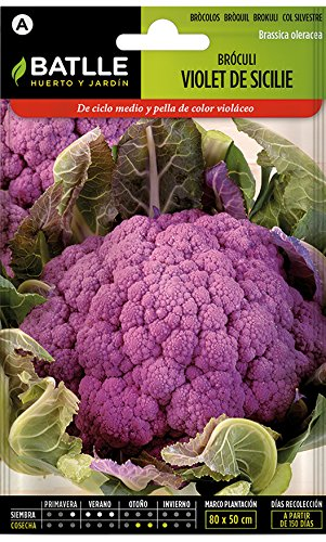 Batlle Gemüsesamen – Brokkoli Violett Sicile (Samen)