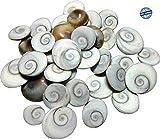 #6: Original Energized Gomti Chakra (21 Chakras) / High Quality Gomti Chakra by NEELAM RATNA Products