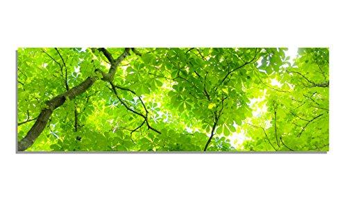 PIX Visions Leinwand Bild Bilder Natur Wald Baum Licht grün Äste Sonnenstrahl hell Bäume Leinwandbilder Panorama Sonne Äste Zweige Licht (150x50 cm) -