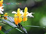 Las semillas reales Negro bayas de Goji árbol china de Ningxia Goji Berry Semillas de hierbas Inicio Bonsai exterior jardín de hierbas plantas Patio