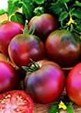 SeeKay Tomato Black Russian Appx 300 seeds - Vegetables