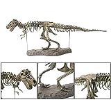 4D Puzzle Fossil Dinosaurier Skelett Spielzeug Dinosaurier Knochen Spielzeug für Kinder, Spielzeug Modell Dinosaurier Spielzeug Skelett Fossil Skelette DIY Spielzeug, Groß, Ornamente