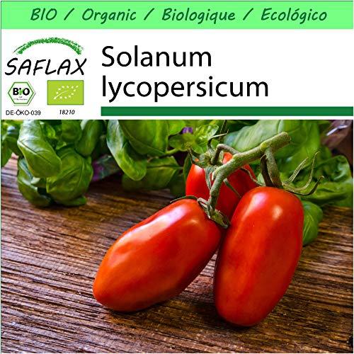 SAFLAX - Jardin dans la boîte - BIO - Tomate - San Marzano - 15 graines - Avec pot en argile, support, substrat de culture et engrais - Solanum lycopersicum