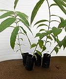 #10: Seedseller Poly Grow Bags Black 12cm Height X 6Cm Dia (50 Nos)