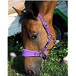 JF/Riding Horses Nylon Headcollar Padded Cob, Purple, AHA/05–06/03 4