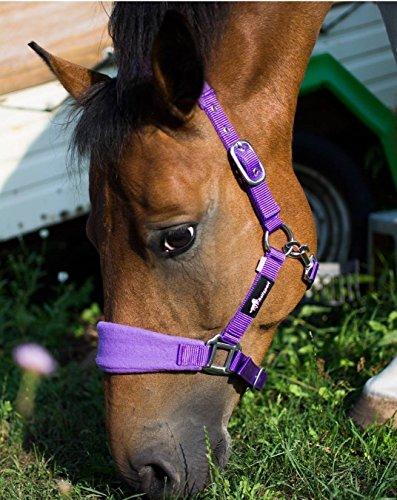 JF/Riding Horses Nylon Headcollar Padded Cob, Purple, AHA/05–06/03 2