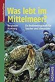 Was lebt im Mittelmeer: Neue, erweiterte und überarbeitete Ausgabe - Matthias Bergbauer