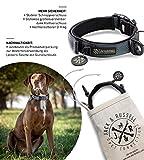 Jack & Russell Premium Hundehalsband Milu - Klettband - reflektierend - Neopren gepolstert - Hunde Halsband div. Größen und Farben - Milu (M (35-43 cm), Grau)
