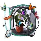 Rolanli Papillon Habitat Papillon et Insectes Cage Mesh Habitat de Papillons - Noir + Vert L