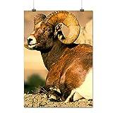 Sauvage Chèvre Montagne Animal Haute Terre Animaux Matte/Glacé Affiche A2 (60cm x 42cm) | Wellcoda